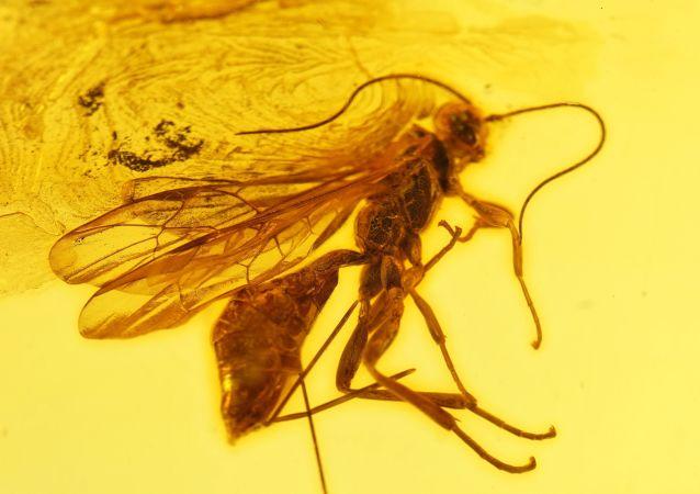 Aż do VIII wieku krążyło wiele wersji i legend na temat pochodzenia bursztynu. Bursztyn nazywano zastygłymi cząstkami promieni słonecznych, skamieniałą pianą morską, zastygłą rosą osadzoną na drzewach, zastygłymi łzami ptaków a nawet produktem ubocznym dużych mrówek leśnych i pszczół.