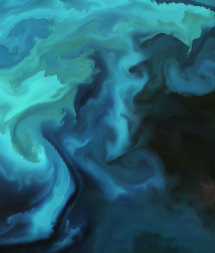 Nagromadzenie planktonu na Morzu Barentsa.