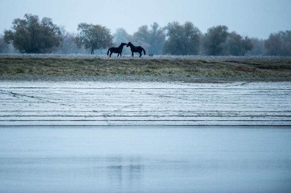 Rzeka Irtysz w rejonie wsi Sibiliakowo obwodu omskiego