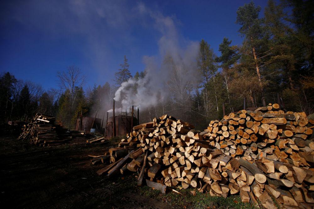 Drewno przy piecach węglowych na terenie wypału węgla drzewnego w bieszczadzkim lesie w Polsce