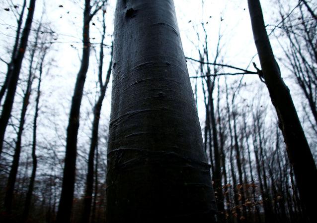 Poroszenko godzi się na wycinkę lasów w zamian za pomoc unijną