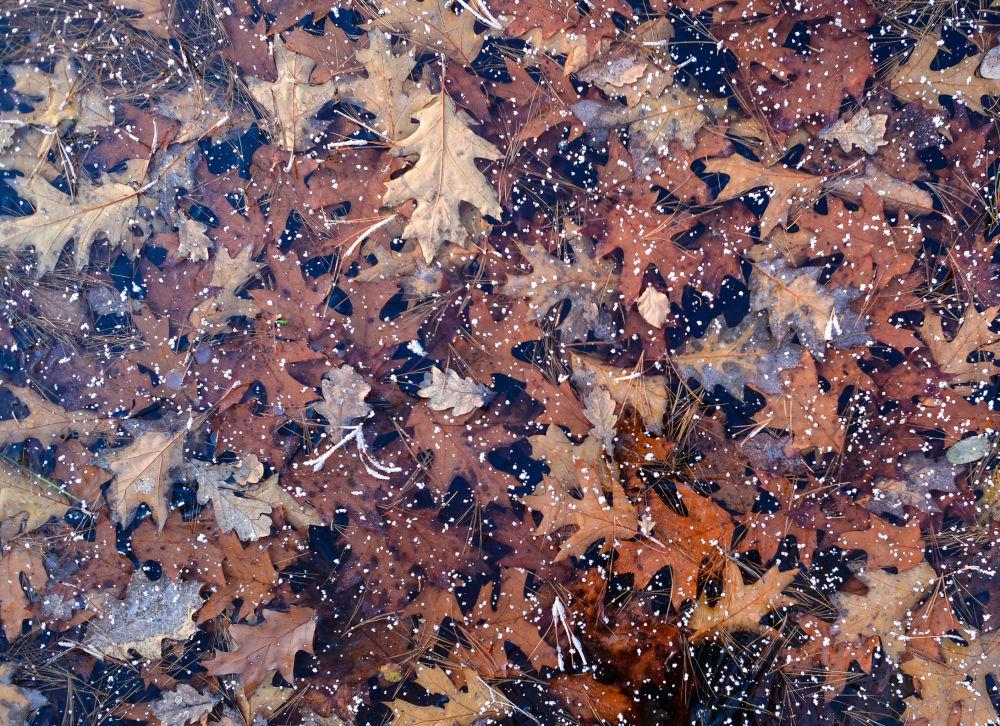 Jesienne liście dębu pod lodem