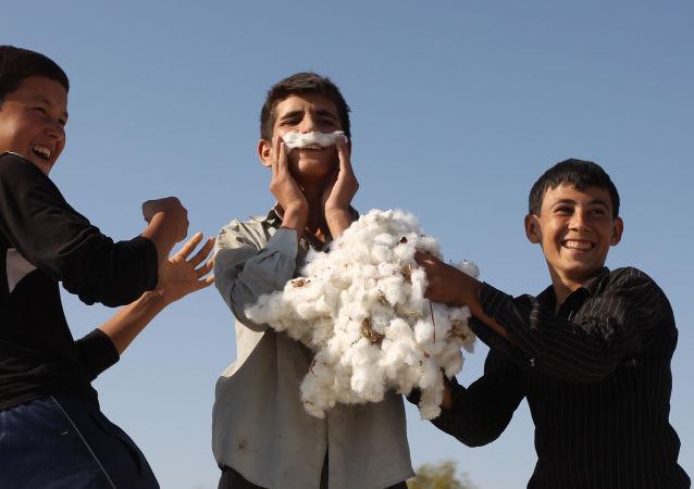 Zbiór bawełny pod Aszchabadem
