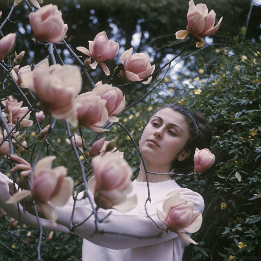Kwiaty Kamelii w oranżerii Gruzińskiego Instytututu Gospodarki Subtropikalnej, 1970 rok