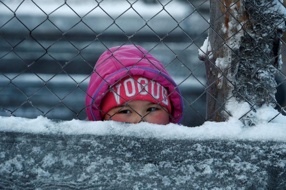 Dziewczynka obserwuje, jak odbywa się segregacja reniferów