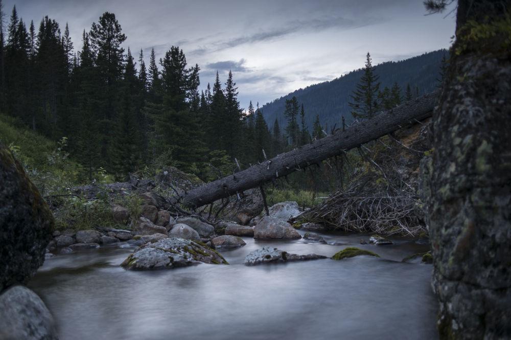 Rezerwat Bajkalski powstał w 1969 roku. Jednym z jego najważniejszych zadań jest ochrona dziewiczych lasów cedrowych.