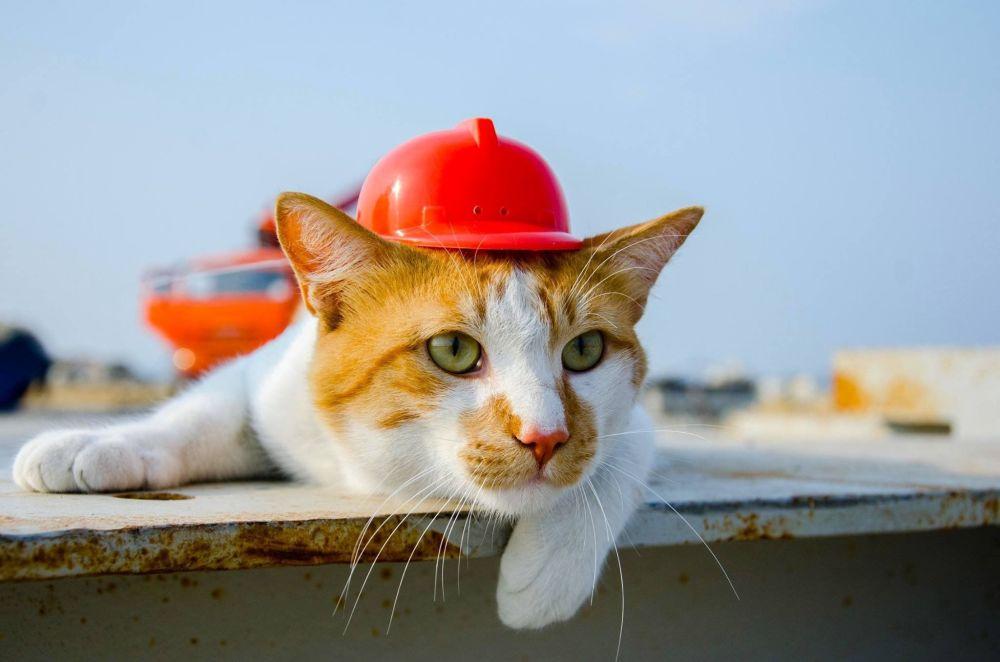 Kot Mosta jest maskotką budowy mostu przez Cieśninę Kerczeńską. W 2015 roku bezdomnego kociaka adoptowali w Tamani pierwsi ochroniarze pracujący na budowie i nazwali go Mostem.