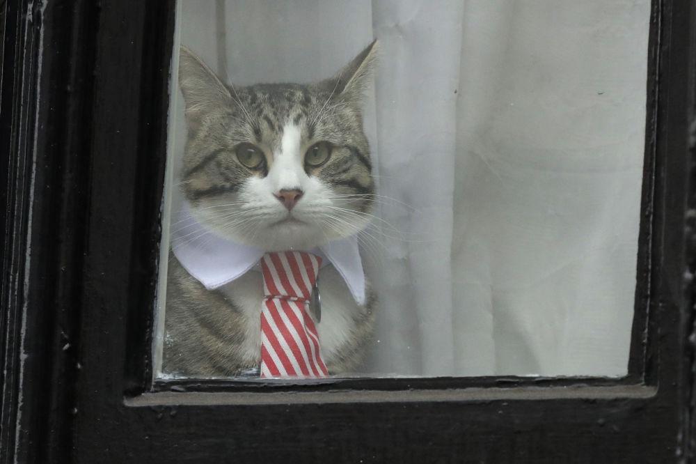 """Kot Juliana Assange'a został gwiazdą w pierwszym dniu przesłuchania właściciela. Wówczas dziennikarze czekający w deszczu pod ambasadą Ekwadoru na jakąkolwiek informację chętnie fotografowali kota """"ubranego"""" odpowiednio do okazji w krawat."""