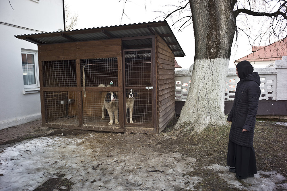 Psy pilnujące klasztoru.