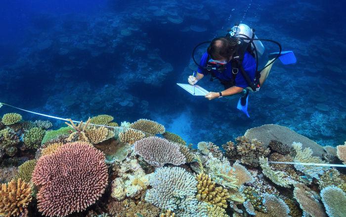 Naukowiec Andrew Baird bada zdrowe koralowce na Wielkiej Rafie Koralowej w Australii.