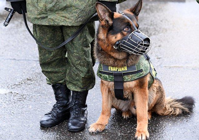 Żołnierz Rosgwardii z psem
