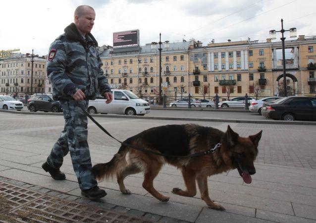 Pracownik służb porządkowych z psem na ulicy w Petersburgu