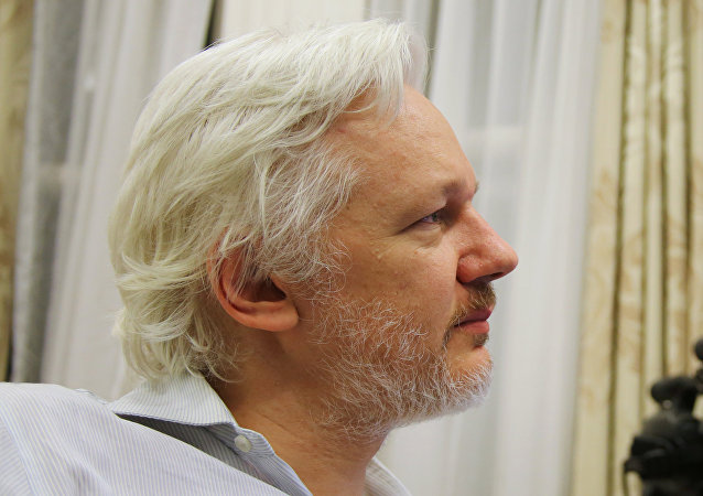 WikiLeaks founder Julian Assange holds up his new kitten at the Ecuadorian Embassy in central London, Britain. (File)