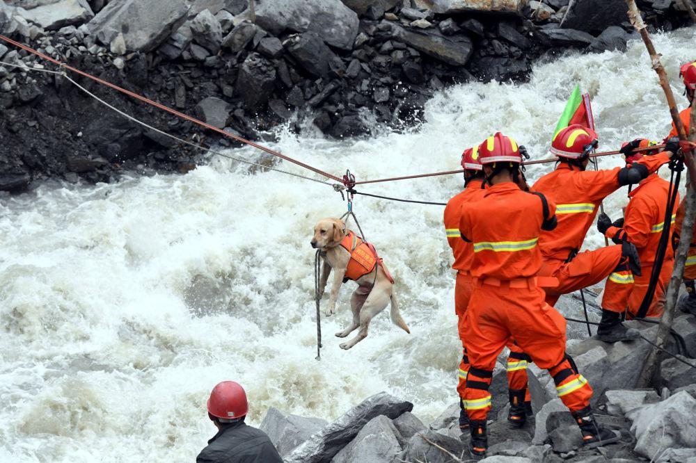 Ratownicy ewakuują psa z miejsca osuwiska w chińskiej prowincji Syczuan