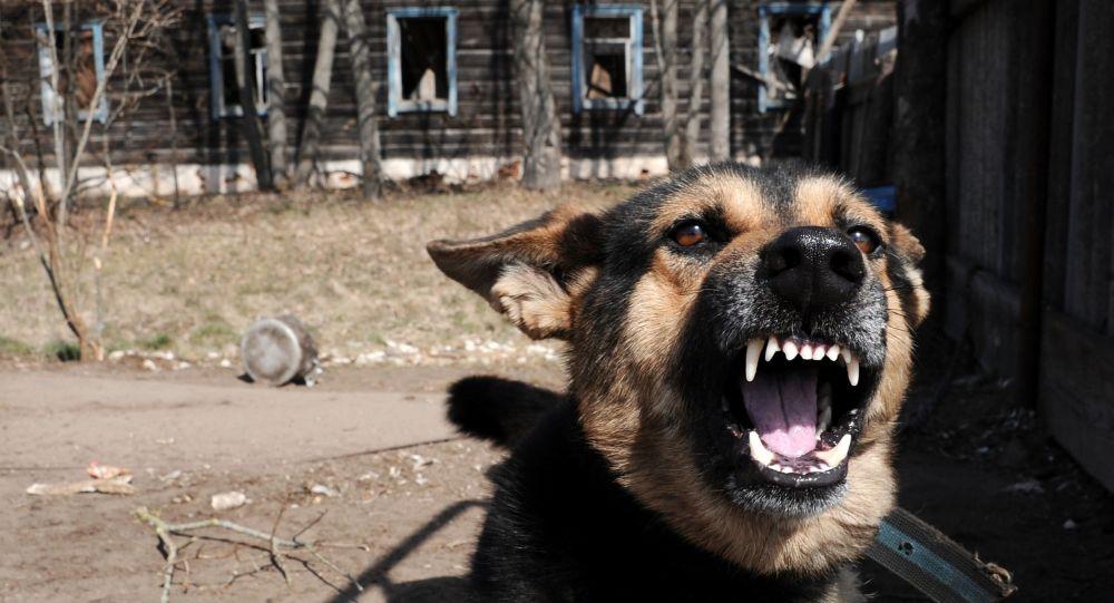 Chiny zaczęły klonować psy supermutanty