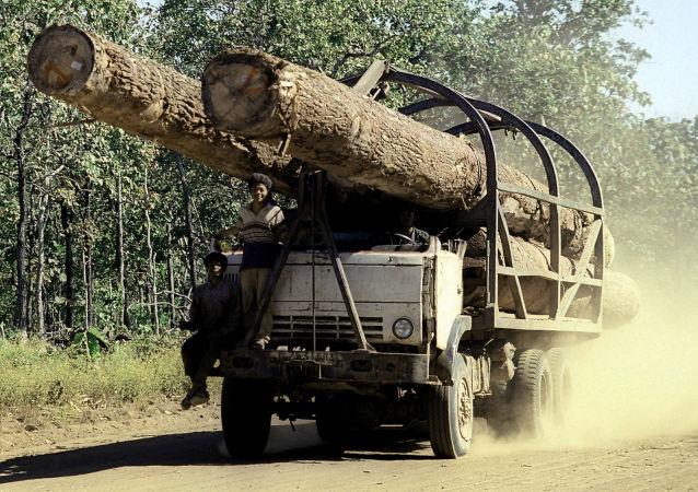 Ciężarówka z odpiłowanymi pniami drzew w Kambodży