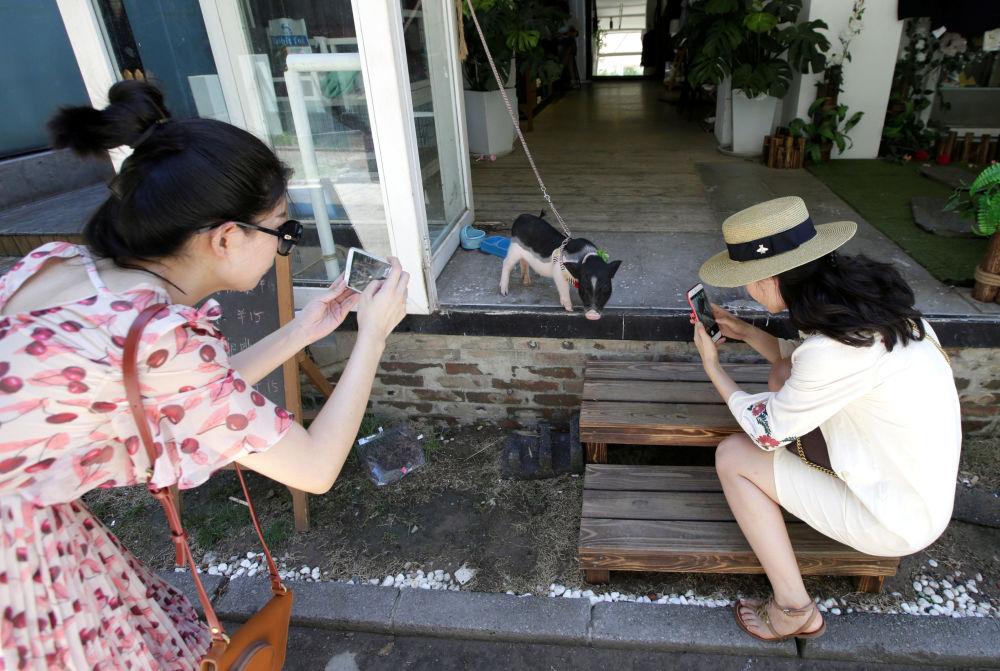 Dziewczynki fotografują prosiaczka przy wejściu do sklepu w Pekinie