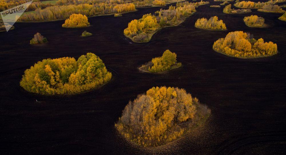 Pola w dole drogi federalnej Sybir