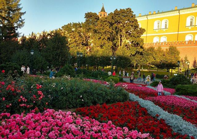Moskwa. Kreml. Ogród Aleksandrowski.