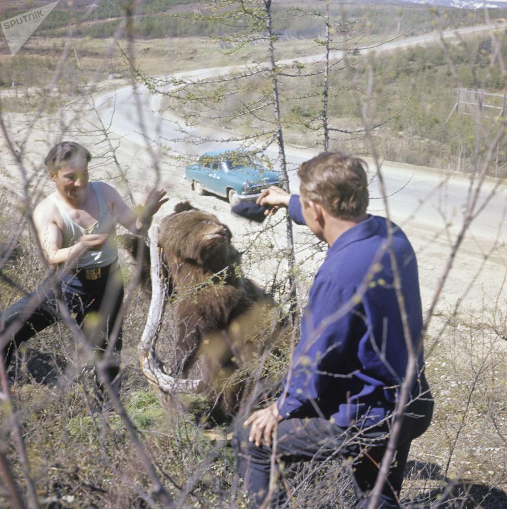 Młodzi ludzie z niedźwiedziem, który wyszedł z tajgi na szosę kołymską, 1967 rok