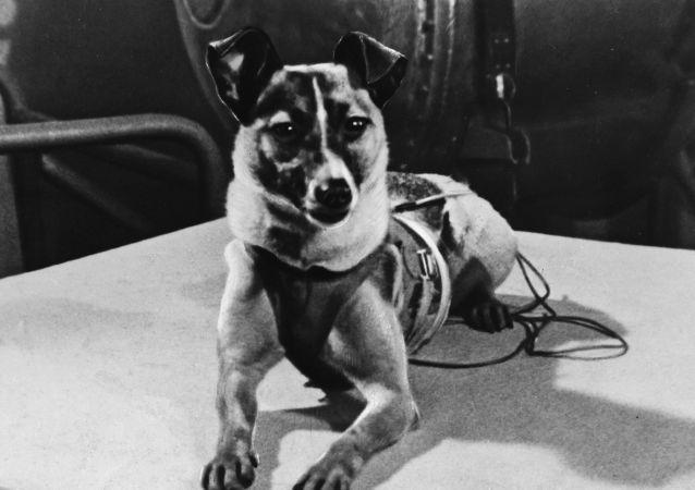 Pies kosmonauta Łajka