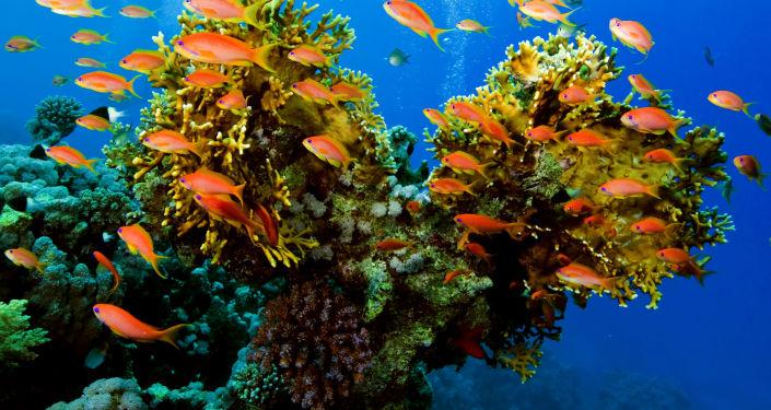 Ryby na tle rafy koralowej