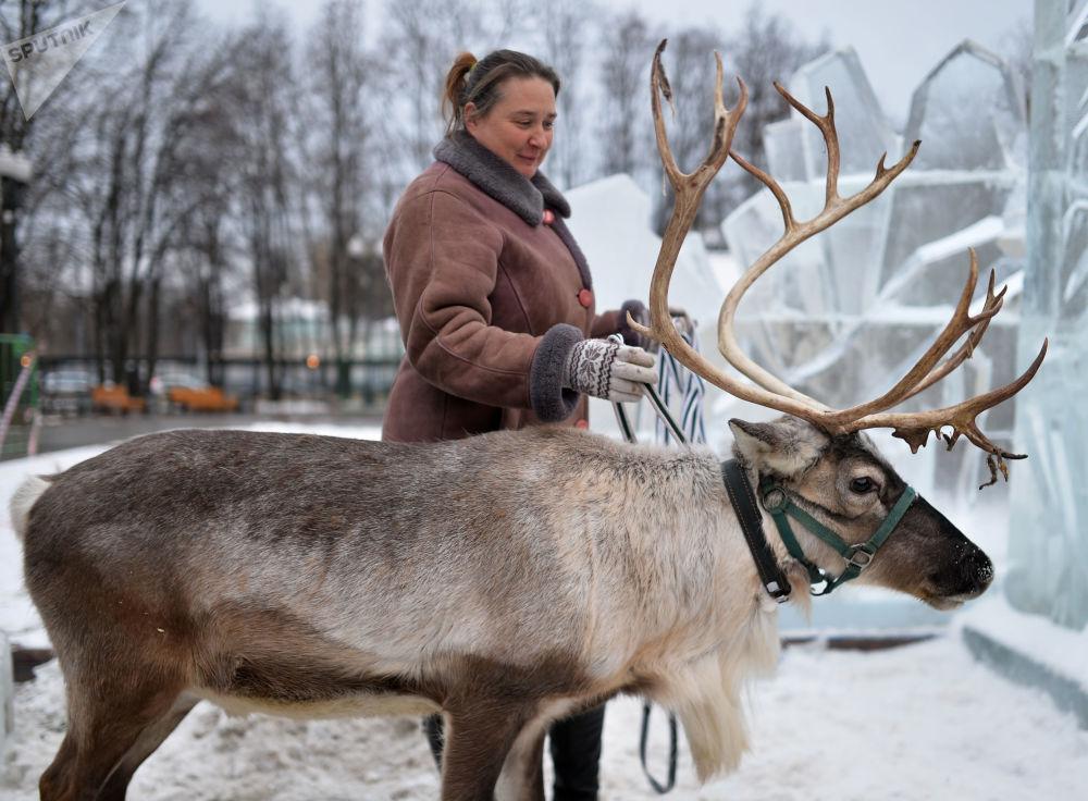 Jeleń na festiwalu Królowa Śniegu w centrum Moskwy, 2014 rok