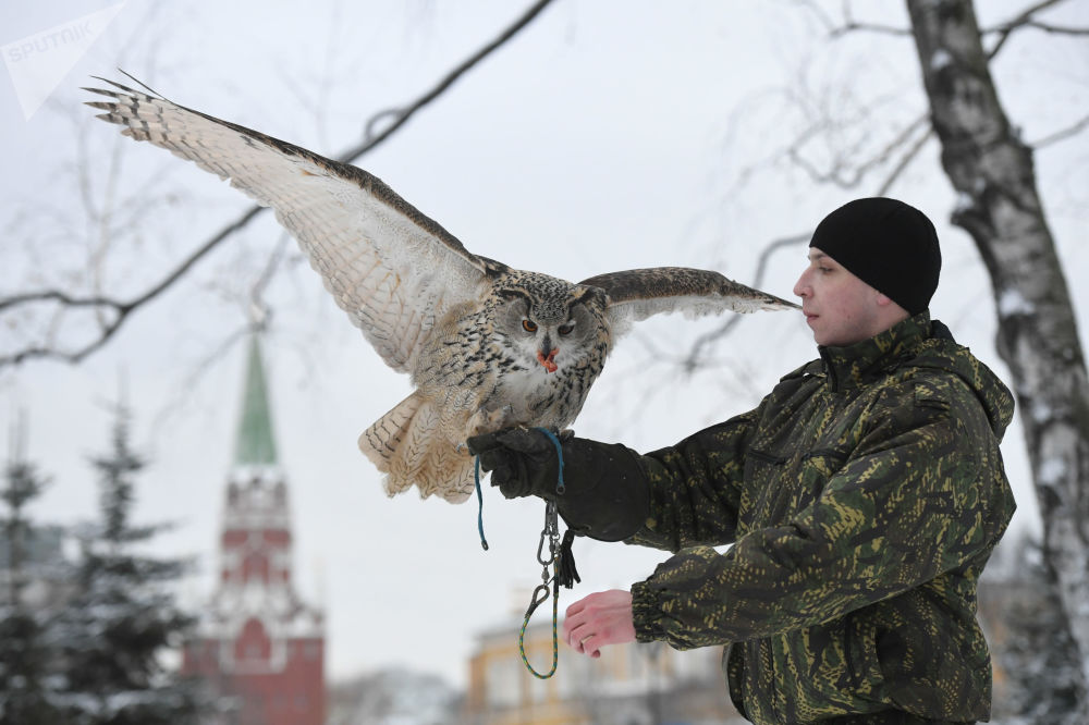 Puchacz sokolniczej służby Moskiewskiego Kremla