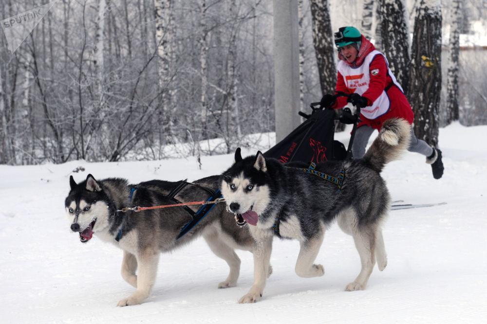 Wyścigi w Nowosybirsku.