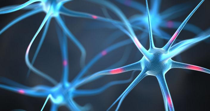 Neurony w ludzkim mózgu