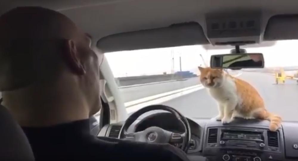 Nikołaj Wałujew i kot Mostik