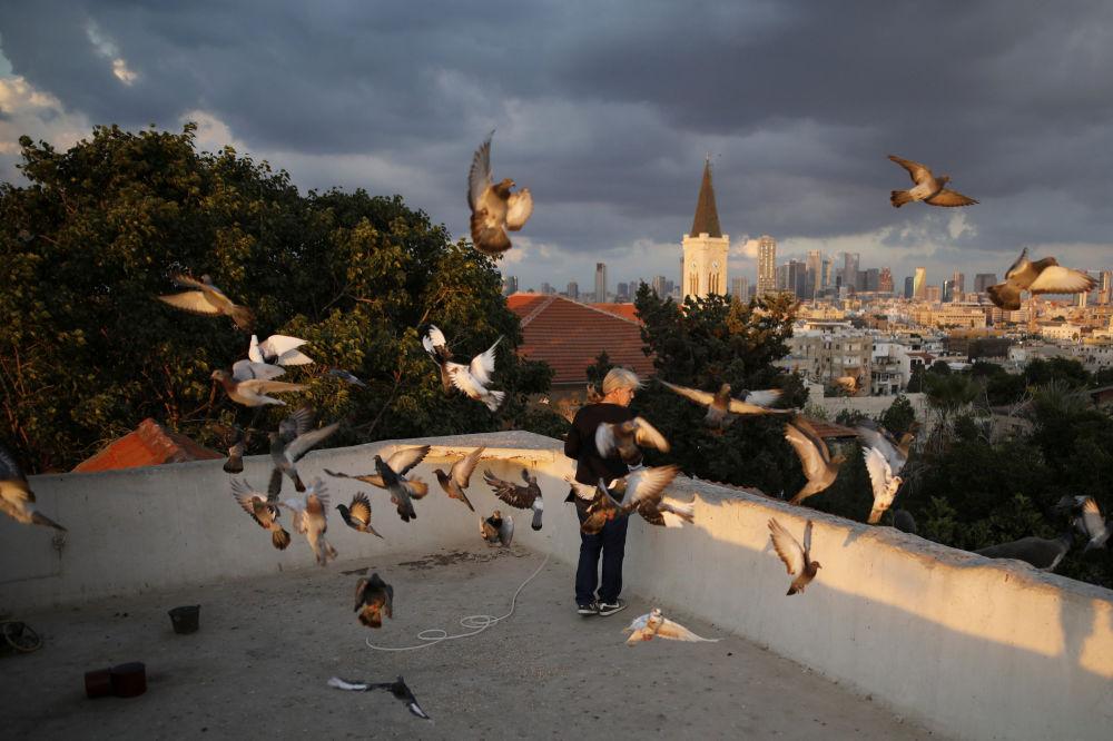 Kobieta karmi ptaki na dachu domu w Tel Awiwie.