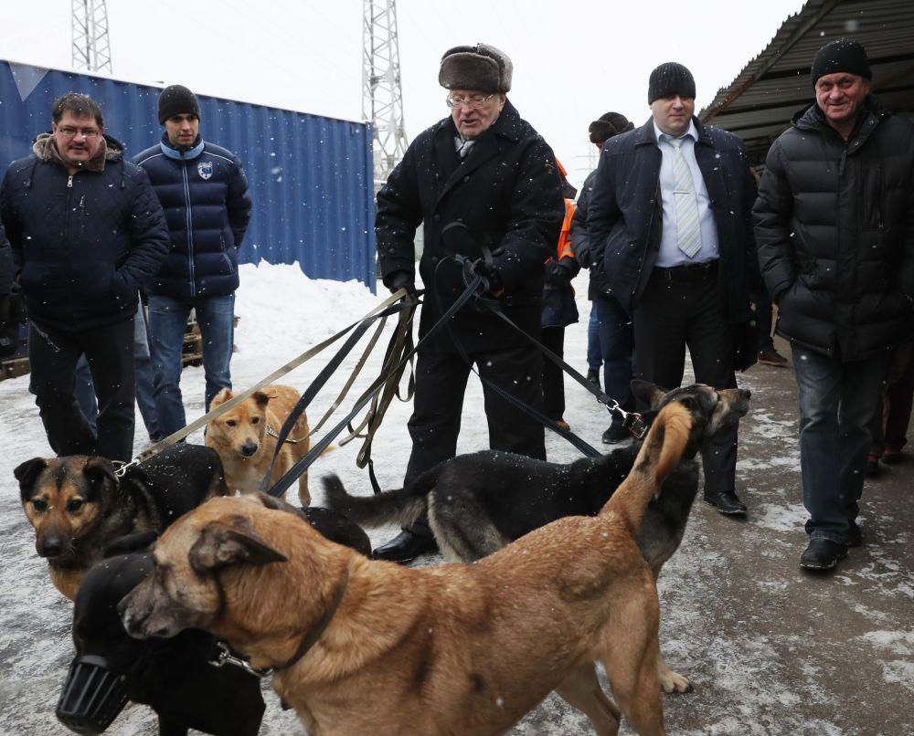 Władimir Żyrinowski w schronisku dla psów w Moskwie