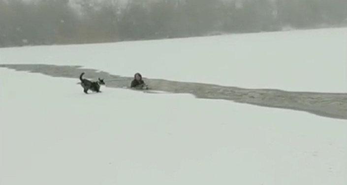 Akcja ratunkowa psa