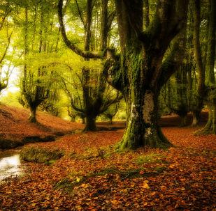 Las w Kraju Basków, Hiszpania