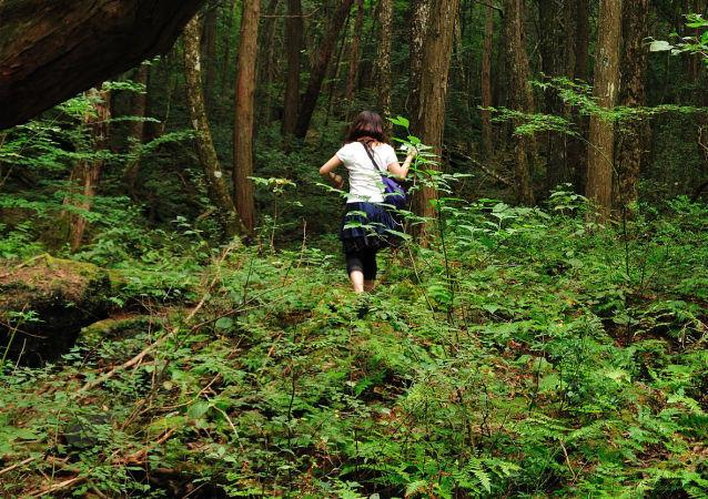 Las w Japonii