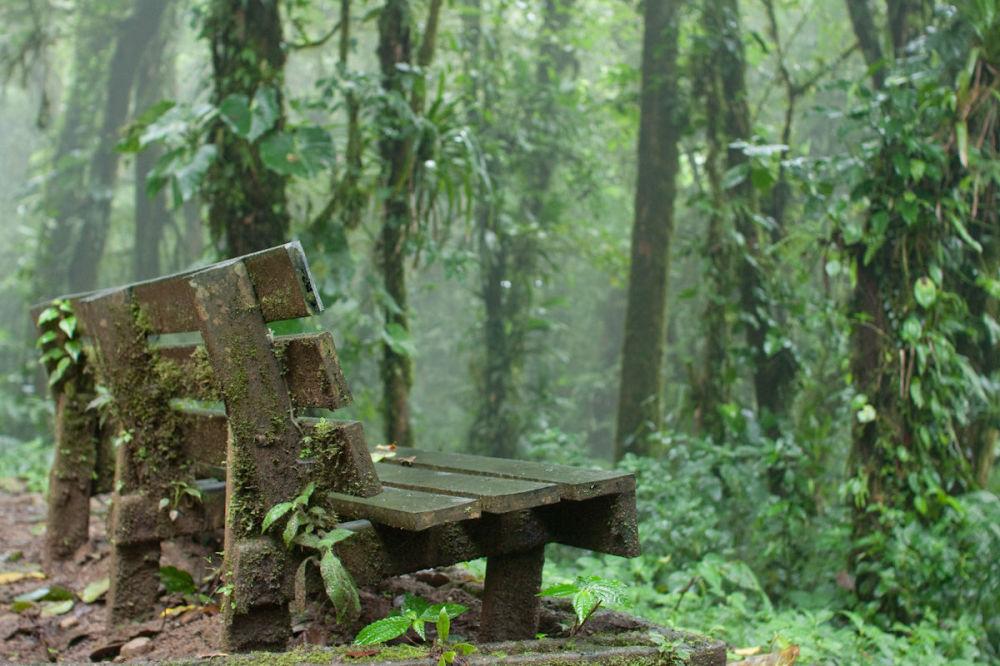 Las Monteverde, Kostaryka