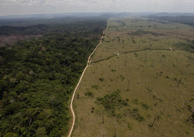 Las deszczowy w Brazylii