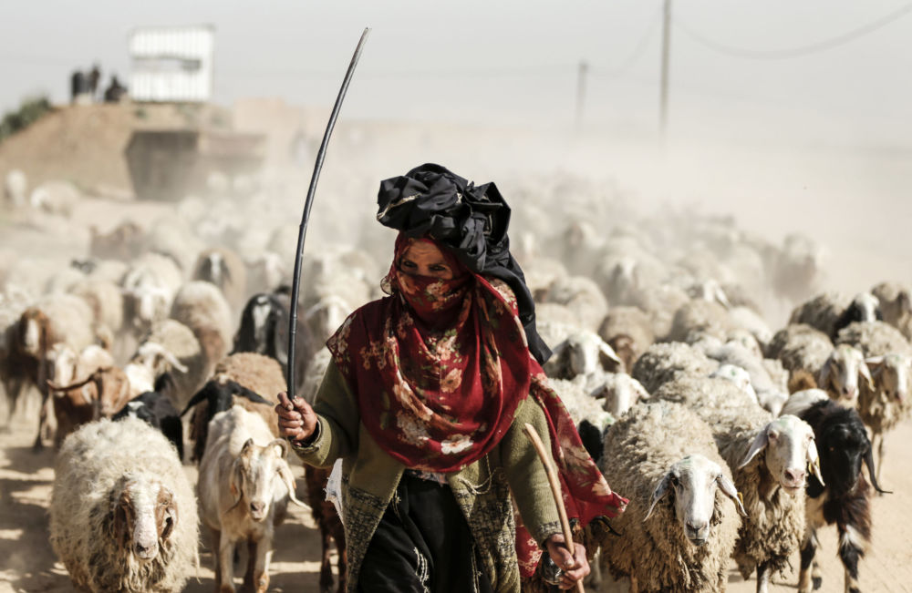 Kobieta wypasająca stado owiec na obrzeżach Gazy