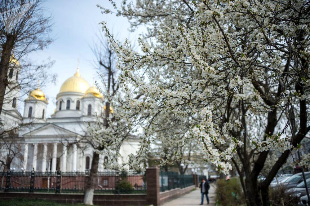 Kwitnąca wiśnia w Symferopolu