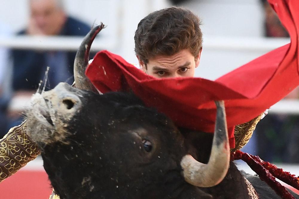 Hiszpański torreador podczas walki z bykiem w Arles, Francja
