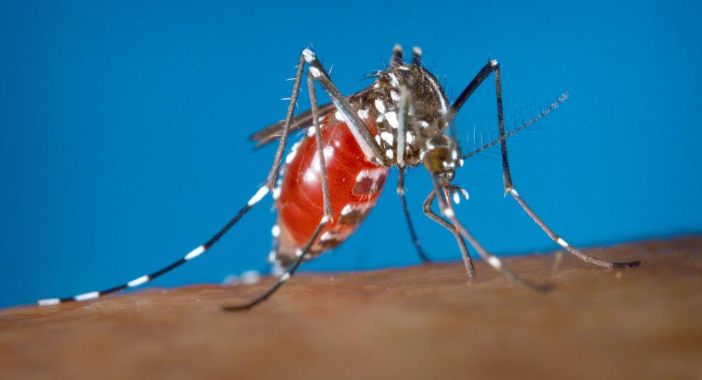 Komar ssie krew