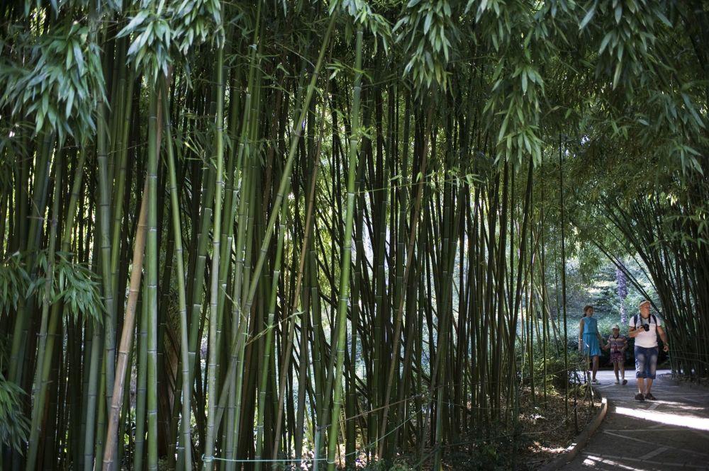 Urlopowicze w gaju bambusowym Nikitskiego ogrodzu botanicznego na Krymie