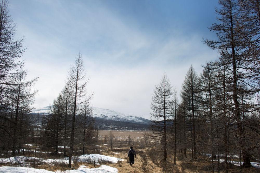 Łowca reniferów Erdenbat Chuluu idzie przez las niedaleko wsi Cagaannguur, Huvsgel, Mongolia