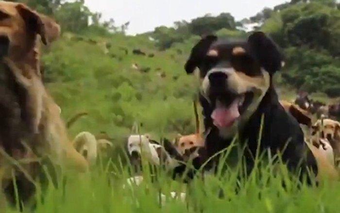 Raj dla bezdomnych psów