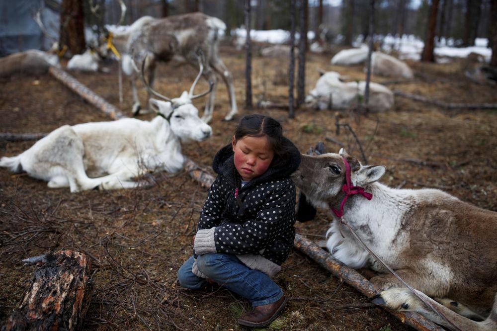 Sześcioletnia mongolska dziewczyna siedzi wśród jeleni w lesie blisko wioski Tsagaannuur, Mongolia