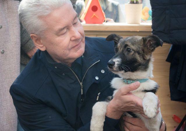 Mer Moskwy Siergiej Sobianin ze swoim psem