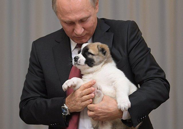 Putin z psem