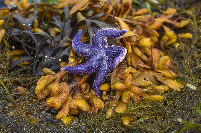 Zbiór dzikich alg