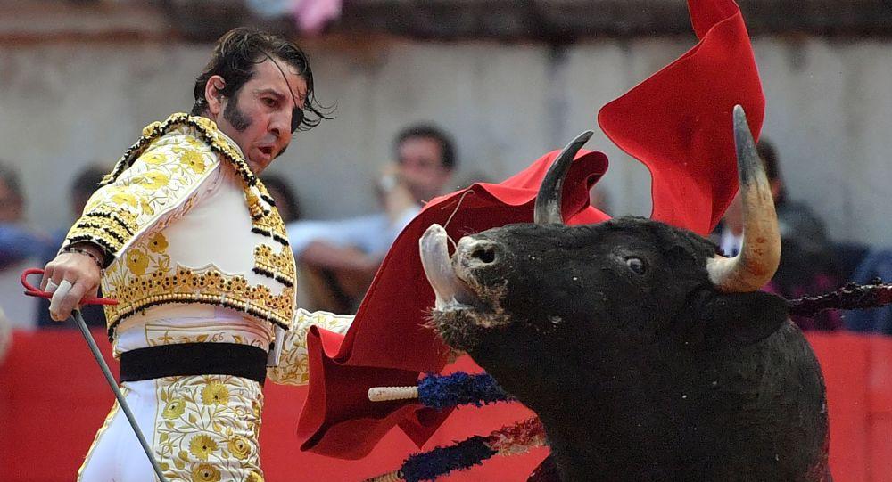 Hiszpański matador Jose Padilla podczas korridy